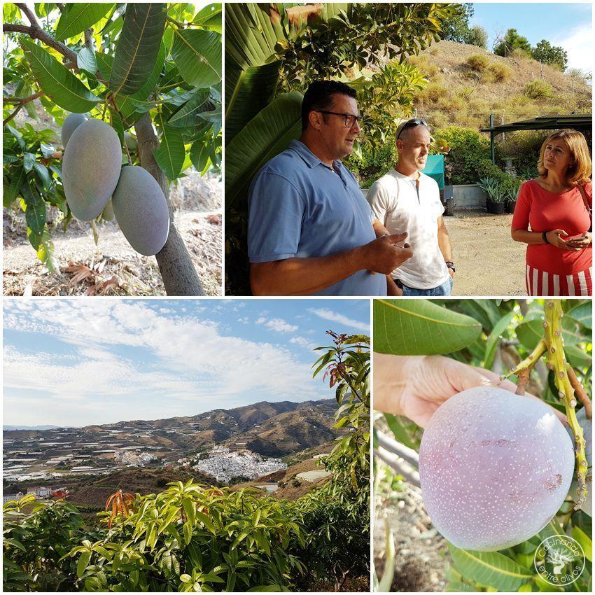 Sabor a Mango Algarrobo